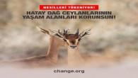 Hatay Dağ Ceylanlarının yaşam alanları korunsun!