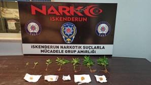 İskenderun'da bir evde Hint keneviri bitkisi ile Sentetik Kannabinoid maddesi bulundu