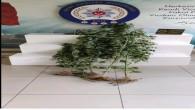Defne Harbiye ve Gümüşgöze mahallelerinde hint keneviri yakalandı