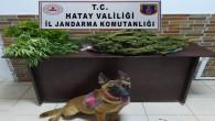 Jandarma Samandağ Mızraklı'da 1.200 gram kubar esrar ile ruhsatsız av tüfeği yakaladı