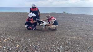 Jandarma Arsuz'da yaralı Leylek'i kurtardı