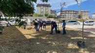 Antakya Belediyesi parklarda ağaçlandırma çalışmalarını sürdürüyor