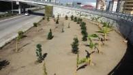 Hatay Büyükşehir Belediyesi peyzaj düzenlemeleri çerçevesinde ağaç dikimini sürdürüyor