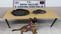 Jandarma, Yayladağı Şenköy'de 3 kilo 200 gram kubar esrar ele geçirdi